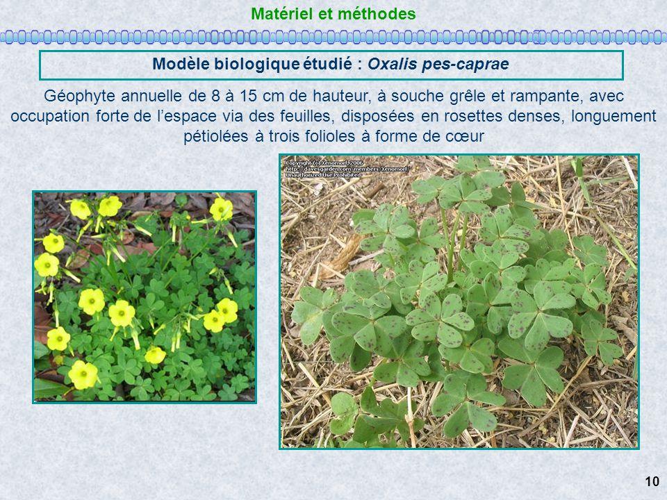 Matériel et méthodes Modèle biologique étudié : Oxalis pes-caprae Géophyte annuelle de 8 à 15 cm de hauteur, à souche grêle et rampante, avec occupati