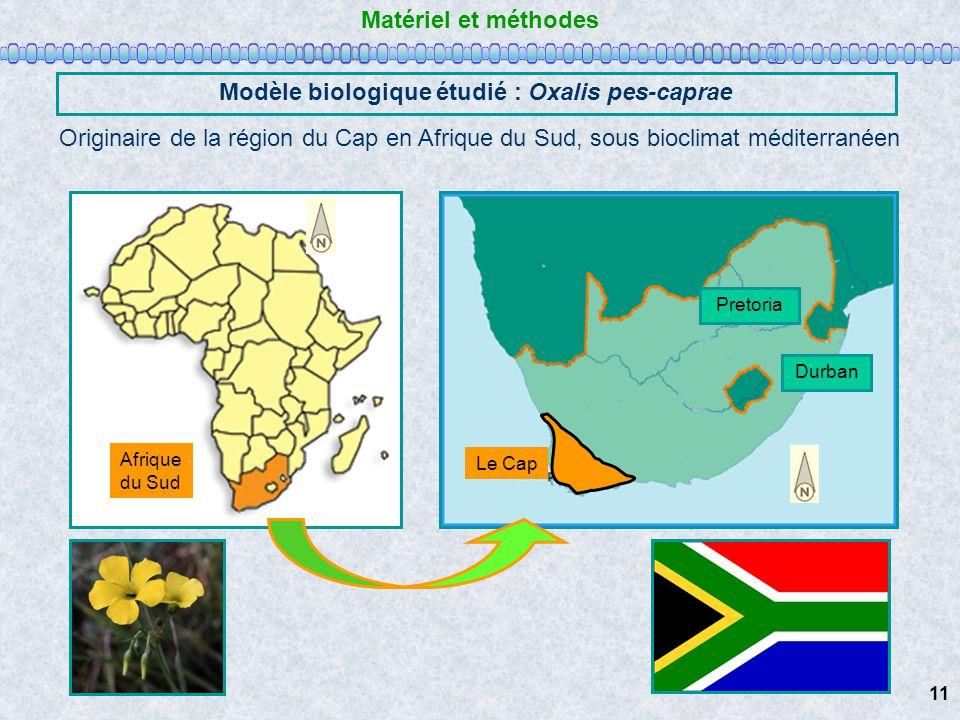 Matériel et méthodes Modèle biologique étudié : Oxalis pes-caprae Originaire de la région du Cap en Afrique du Sud, sous bioclimat méditerranéen Durba