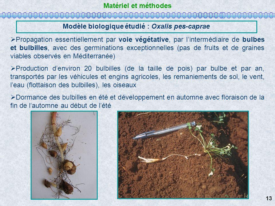 Matériel et méthodes Modèle biologique étudié : Oxalis pes-caprae Propagation essentiellement par voie végétative, par lintermédiaire de bulbes et bul