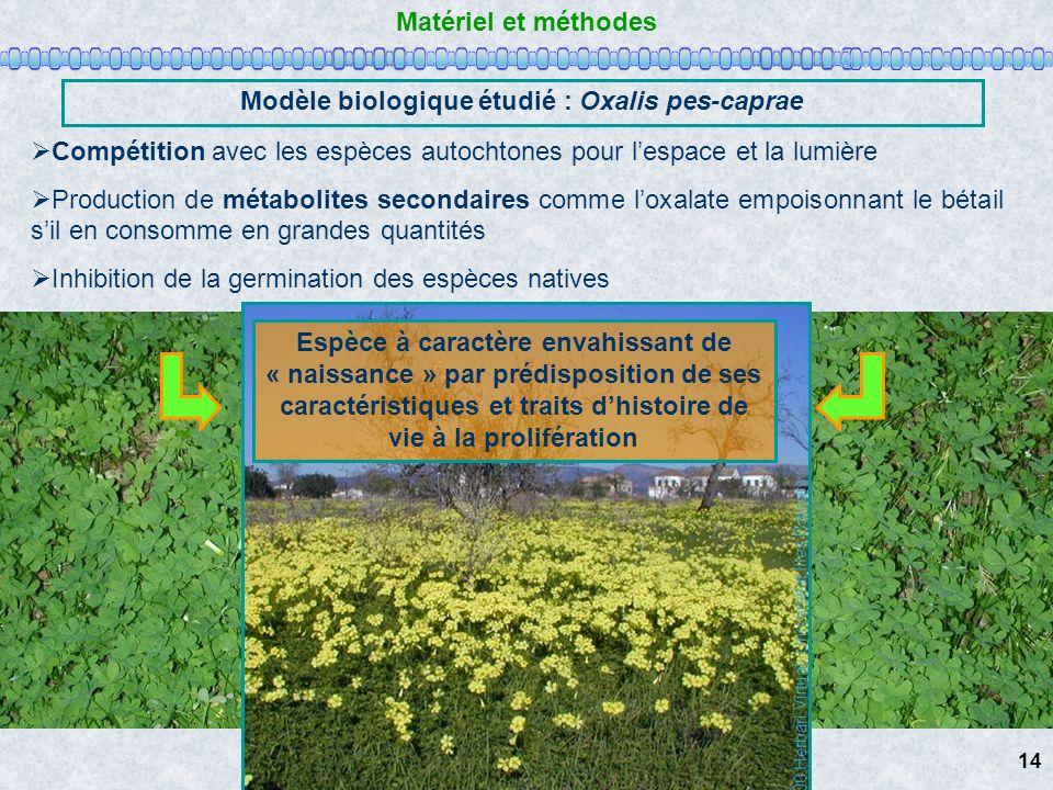 Matériel et méthodes Modèle biologique étudié : Oxalis pes-caprae Compétition avec les espèces autochtones pour lespace et la lumière Production de mé