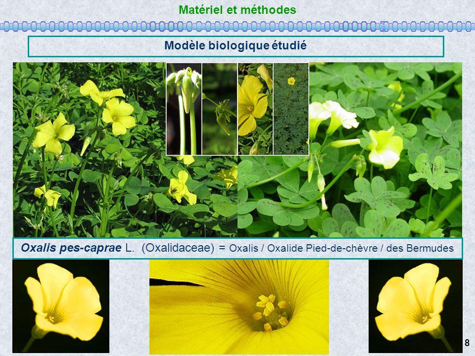 Matériel et méthodes Modèle biologique étudié Oxalis pes-caprae L. (Oxalidaceae) = Oxalis / Oxalide Pied-de-chèvre / des Bermudes 8
