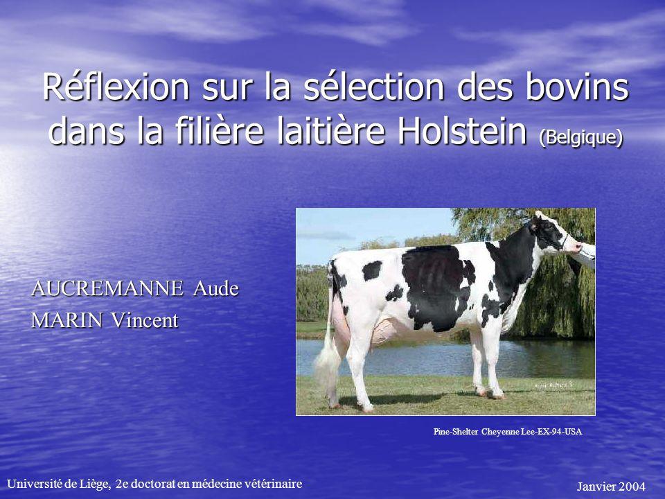 Réflexion sur la sélection des bovins dans la filière laitière Holstein (Belgique) AUCREMANNE Aude MARIN Vincent Pine-Shelter Cheyenne Lee-EX-94-USA U