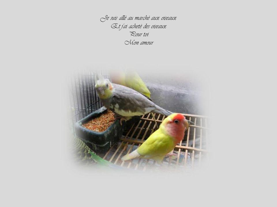 Je suis allé au marché aux oiseaux Et j ai acheté des oiseaux Pour toi Mon amour