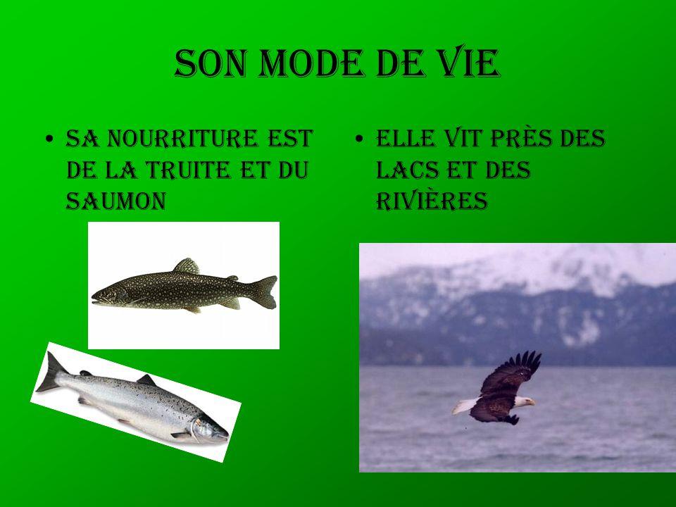 Son mode de vie Sa nourriture est de la truite et du saumon Elle vit près des lacs et des rivières