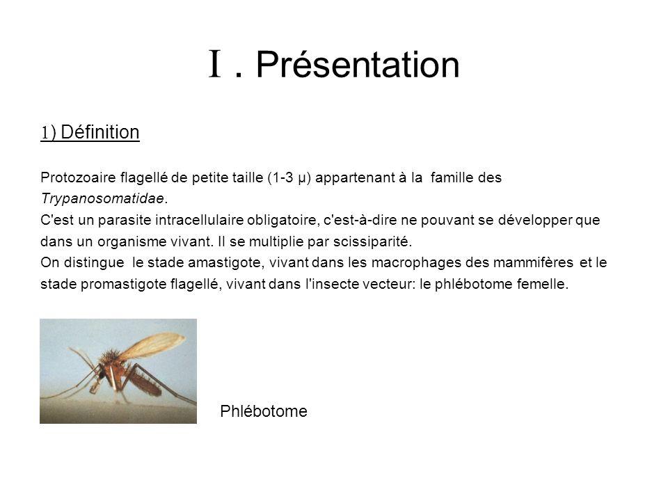 . Présentation ) Définition Protozoaire flagellé de petite taille (1-3 µ) appartenant à la famille des Trypanosomatidae. C'est un parasite intracellul