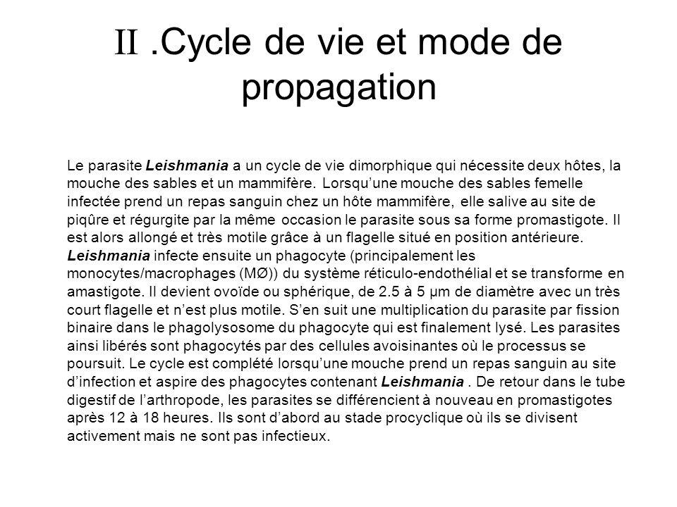 .Cycle de vie et mode de propagation Le parasite Leishmania a un cycle de vie dimorphique qui nécessite deux hôtes, la mouche des sables et un mammifè