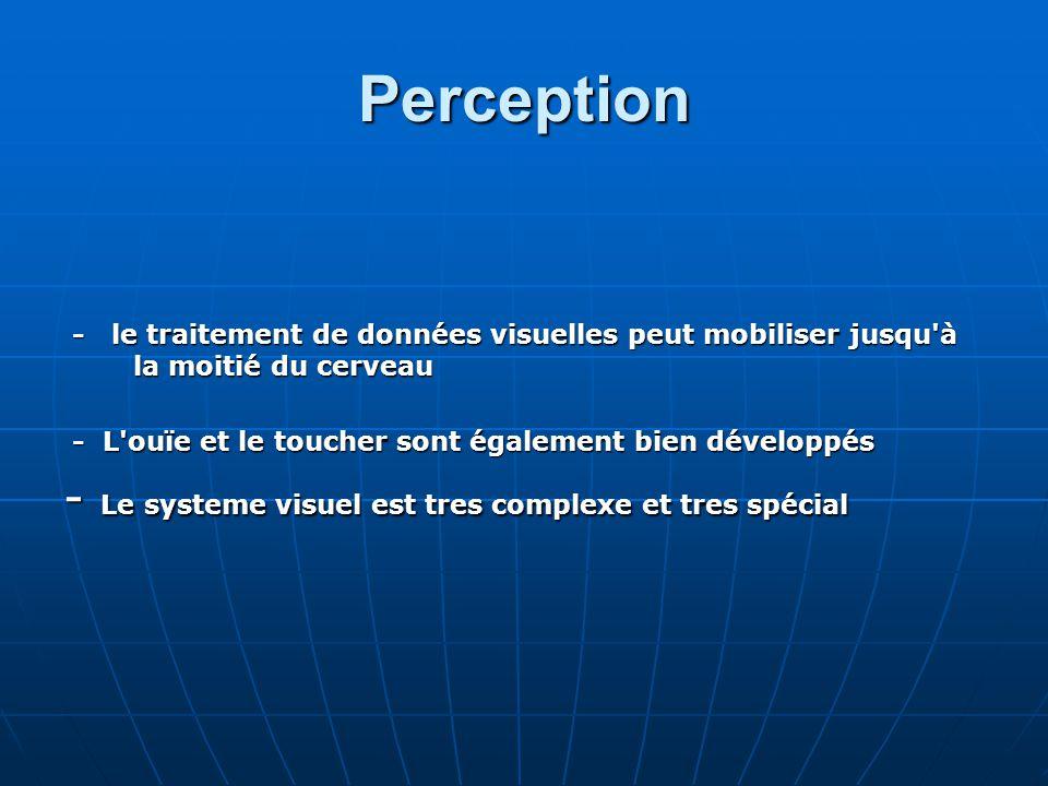 Perception - le traitement de données visuelles peut mobiliser jusqu'à la moitié du cerveau - le traitement de données visuelles peut mobiliser jusqu'