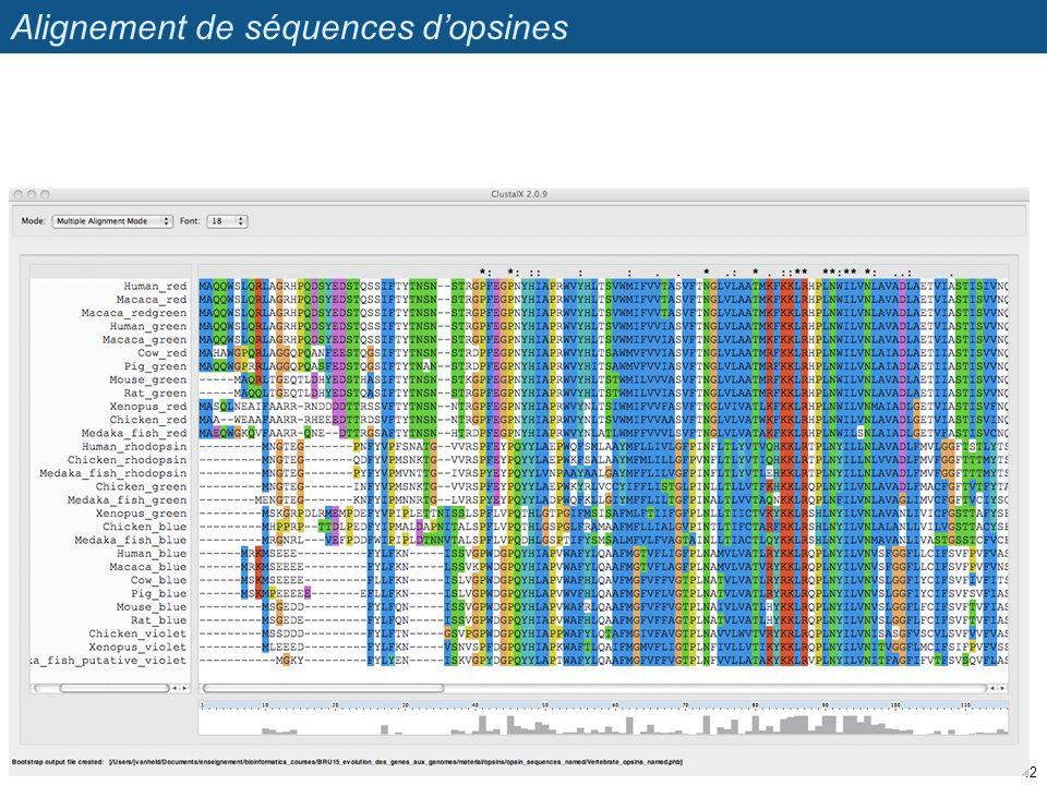 Alignement de séquences dopsines 12