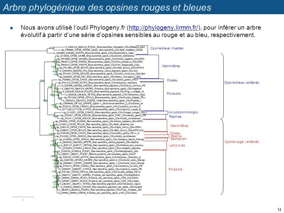 Arbre phylogénique des opsines rouges et bleues Nous avons utilisé loutil Phylogeny.fr (http://phylogeny.lirmm.fr/), pour inférer un arbre évolutif à