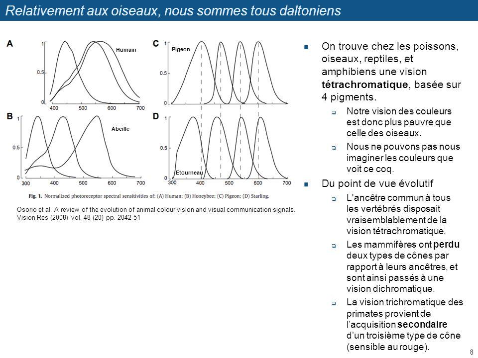 Phylogénie des opsines Larbre phylogénétique a été élaboré sur base des séquences protéiques dune série dopsines.