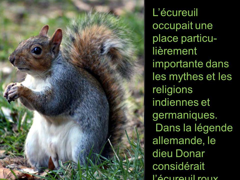 Lécureuil occupait une place particu- lièrement importante dans les mythes et les religions indiennes et germaniques.