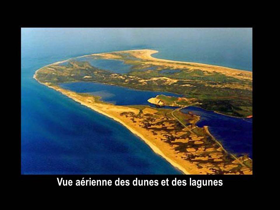 Les lagunes. Lorsque les dunes se doublent et deviennent parallèles, elles isolent des plans d'eau, ce sont les lagunes, qui communiquent avec la mer