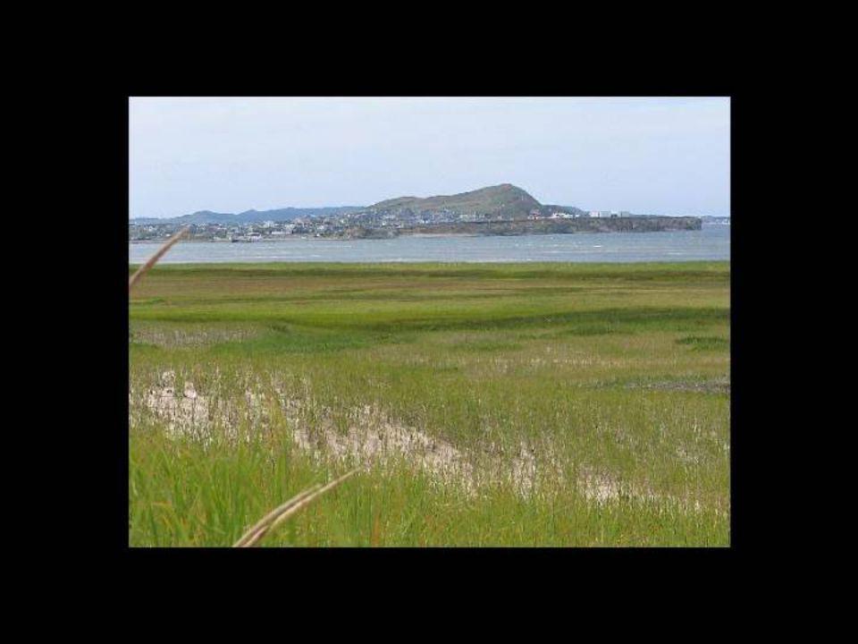 BIENVENUE AUX ÎLES Pour le visiteur qui arrive aux Îles, l'effet est immédiat. Le paysage se compose dîles et de dunes qui s étirent à perte de vue. L