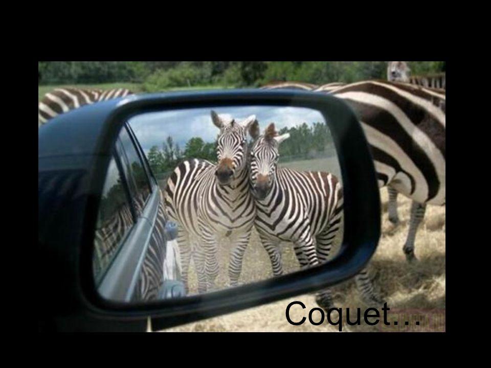 Être curieux…