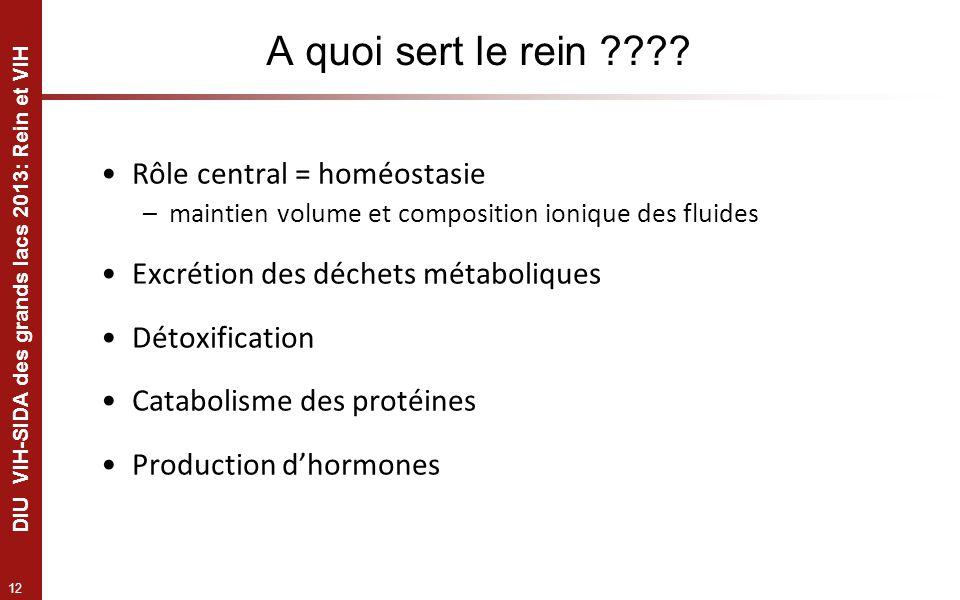 12 DIU VIH-SIDA des grands lacs 2013: Rein et VIH A quoi sert le rein ???? Rôle central = homéostasie –maintien volume et composition ionique des flui
