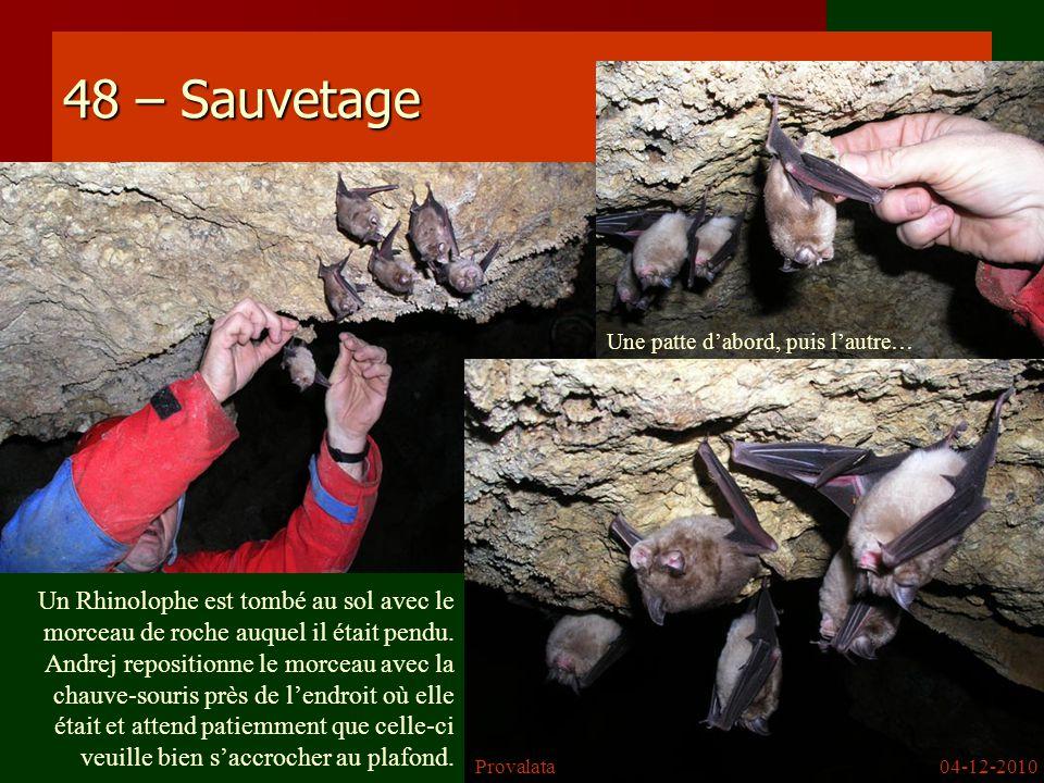 48 – Sauvetage Un Rhinolophe est tombé au sol avec le morceau de roche auquel il était pendu. Andrej repositionne le morceau avec la chauve-souris prè