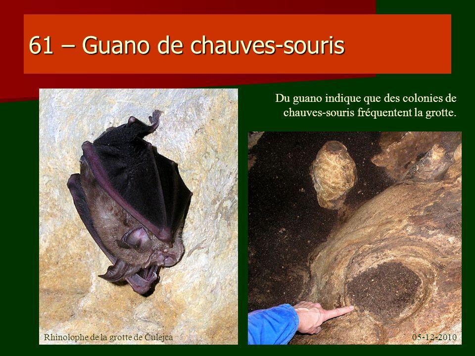 61 – Guano de chauves-souris Rhinolophe de la grotte de Čulejca Du guano indique que des colonies de chauves-souris fréquentent la grotte. 05-12-2010