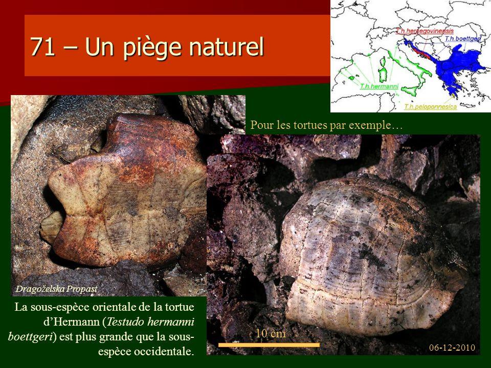 71 – Un piège naturel Pour les tortues par exemple… 06-12-2010 Dragoželska Propast 10 cm La sous-espèce orientale de la tortue dHermann (Testudo herma