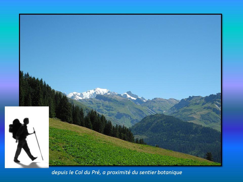 sur le sentier du retour depuis le col de la Fenêtre vers celui du Joly Clichés de vaches sur fond de Mont Blanc