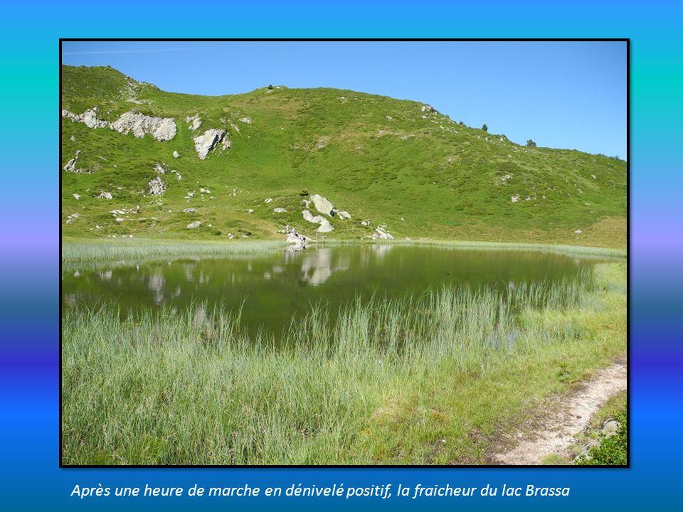 sur le sentier du lac Brassa, depuis les Arolles au dessus du Planay d Arêches