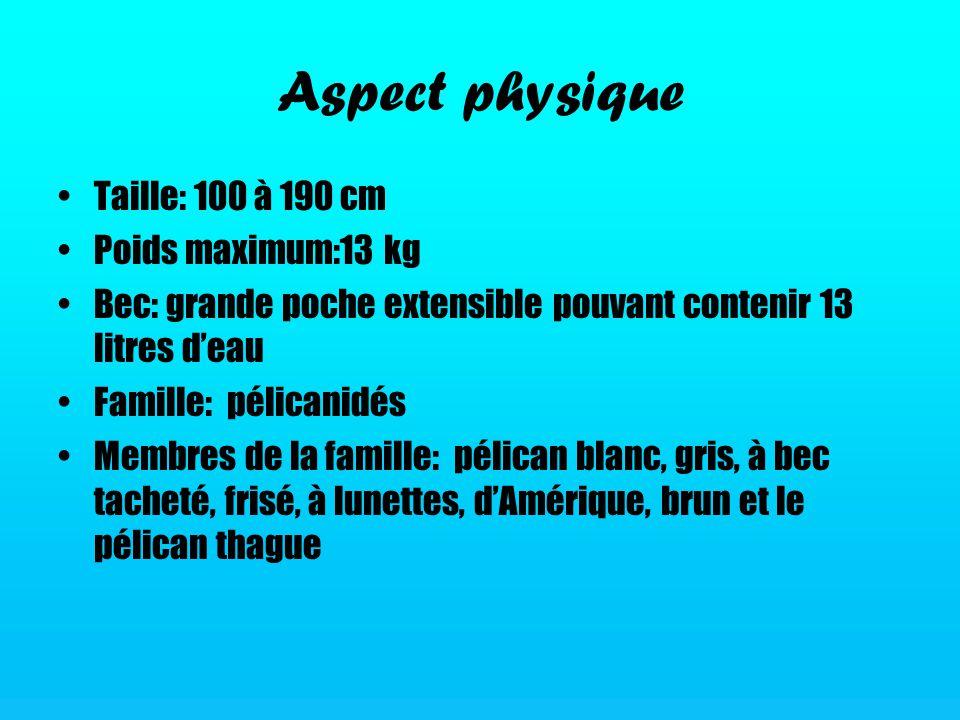 Aspect physique Taille: 100 à 190 cm Poids maximum:13 kg Bec: grande poche extensible pouvant contenir 13 litres deau Famille: pélicanidés Membres de