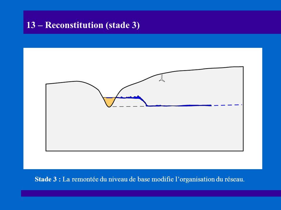 13 – Reconstitution (stade 3) Stade 3 : La remontée du niveau de base modifie lorganisation du réseau.