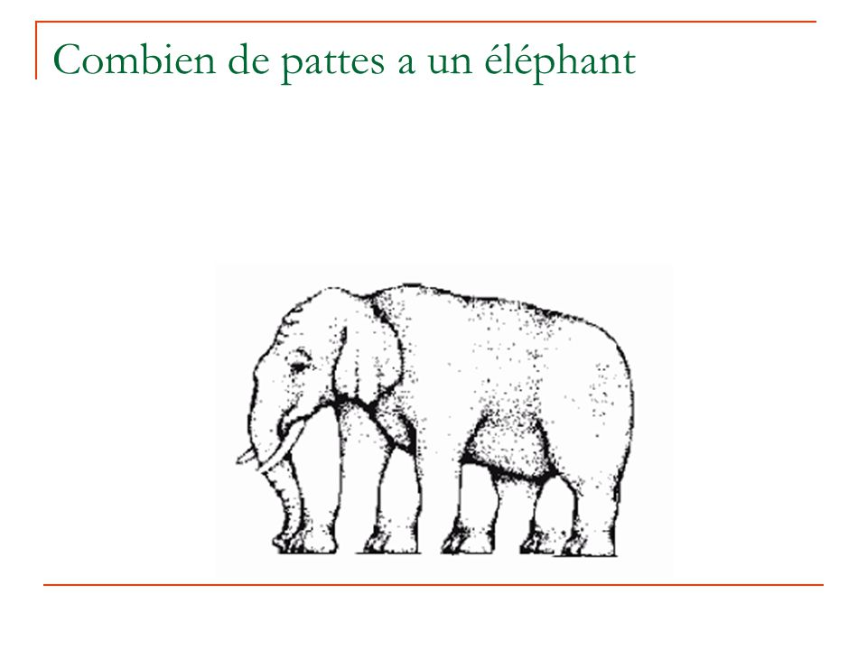 Combien de pattes a un éléphant