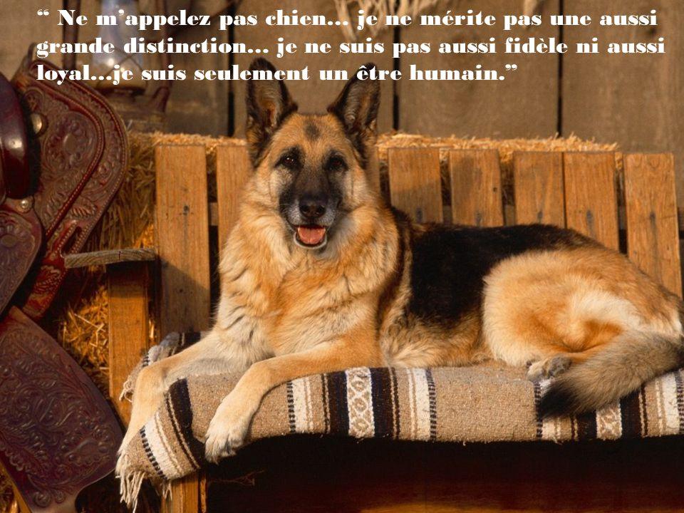Nous pouvons juger le coeur dun homme à la façon dont il traite les animaux. (Immanuel Kant)