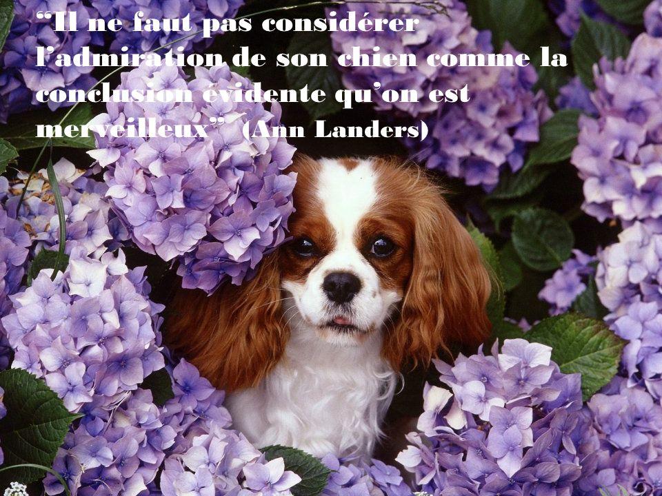 Il est triste pour lêtre humain que le chien étant le meilleur ami de lhomme, lhomme est le pire ami du chien.