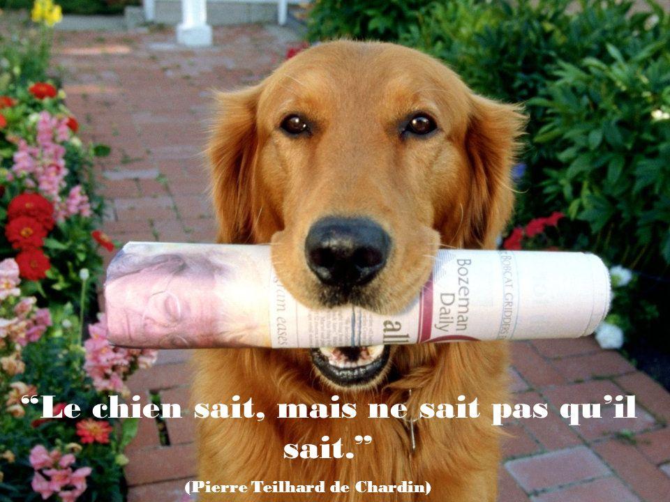 Il ne faut pas considérer ladmiration de son chien comme la conclusion évidente quon est merveilleux (Ann Landers)