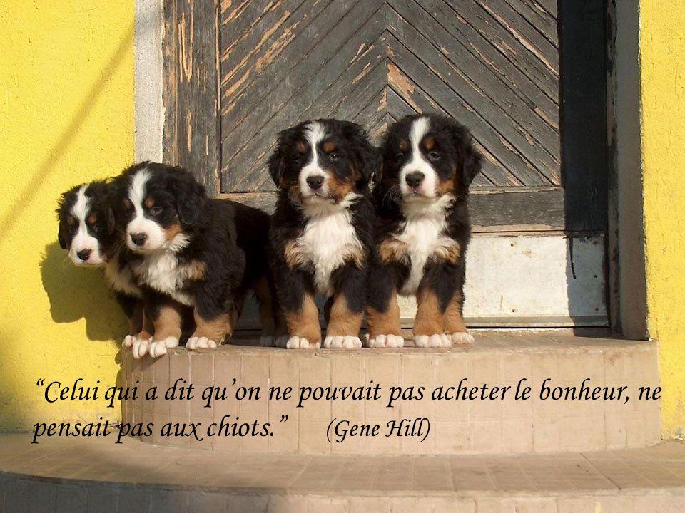Le chien sait, mais ne sait pas quil sait. (Pierre Teilhard de Chardin)