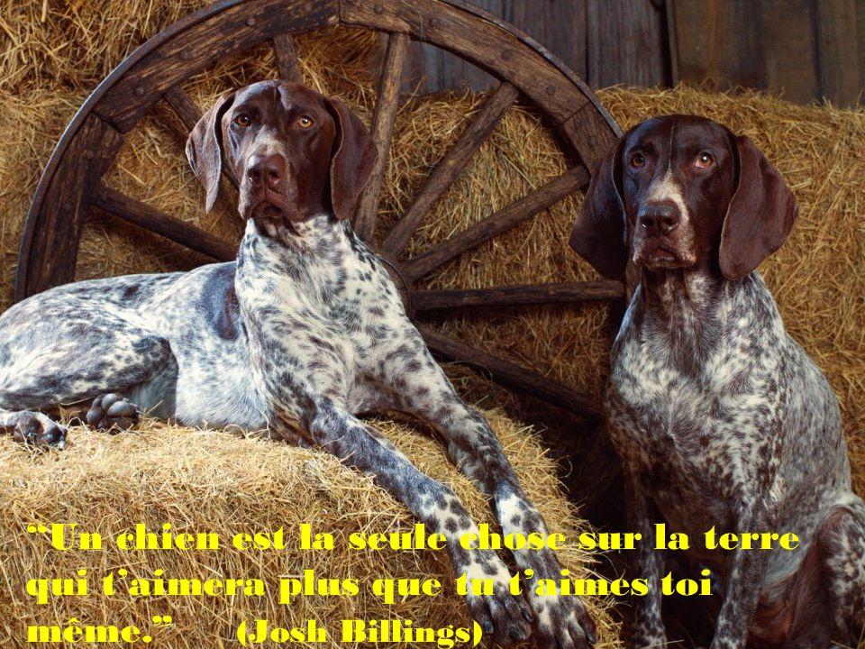 Si une personne ne plaît pas à ton chien, il devrait en être de même pour toi..