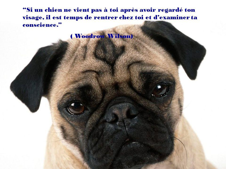 On peut vivre sans chien, mais ça nen vaut vraiment pas la peine. (Heinz Rühmann)