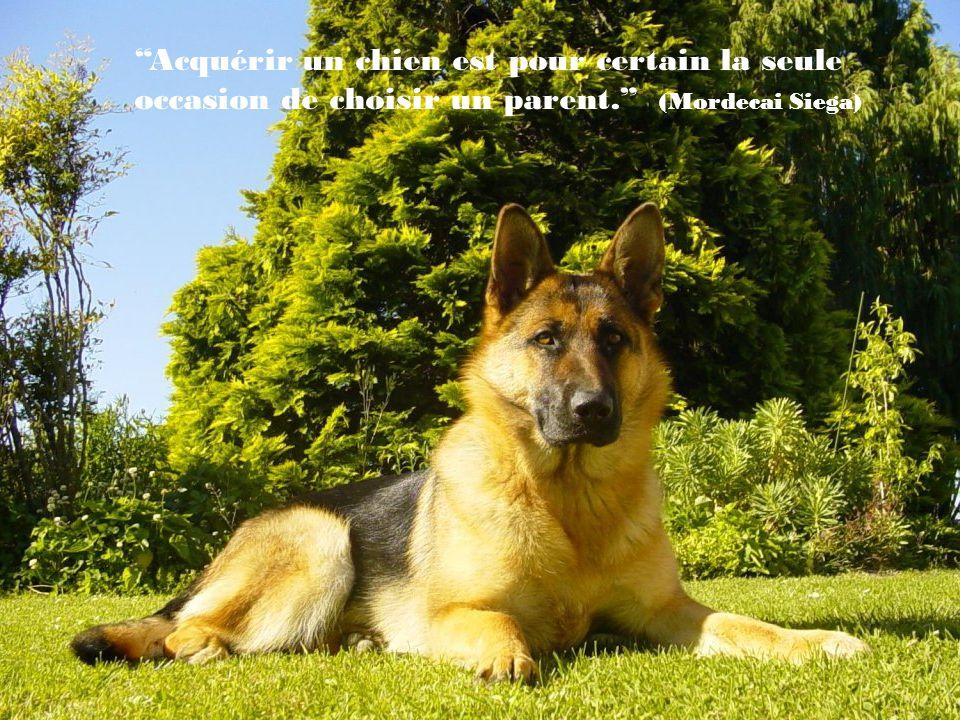 Si un chien ne vient pas à toi après avoir regardé ton visage, il est temps de rentrer chez toi et dexaminer ta conscience.