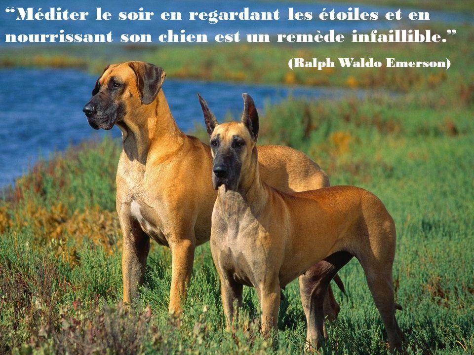 On peut dire nimporte quelle bêtise à un chien, celui-ci te regardera toujours en semblant dire:Oh, mon Dieu .