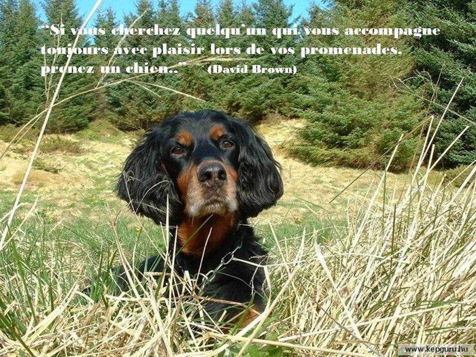Méditer le soir en regardant les étoiles et en nourrissant son chien est un remède infaillible.