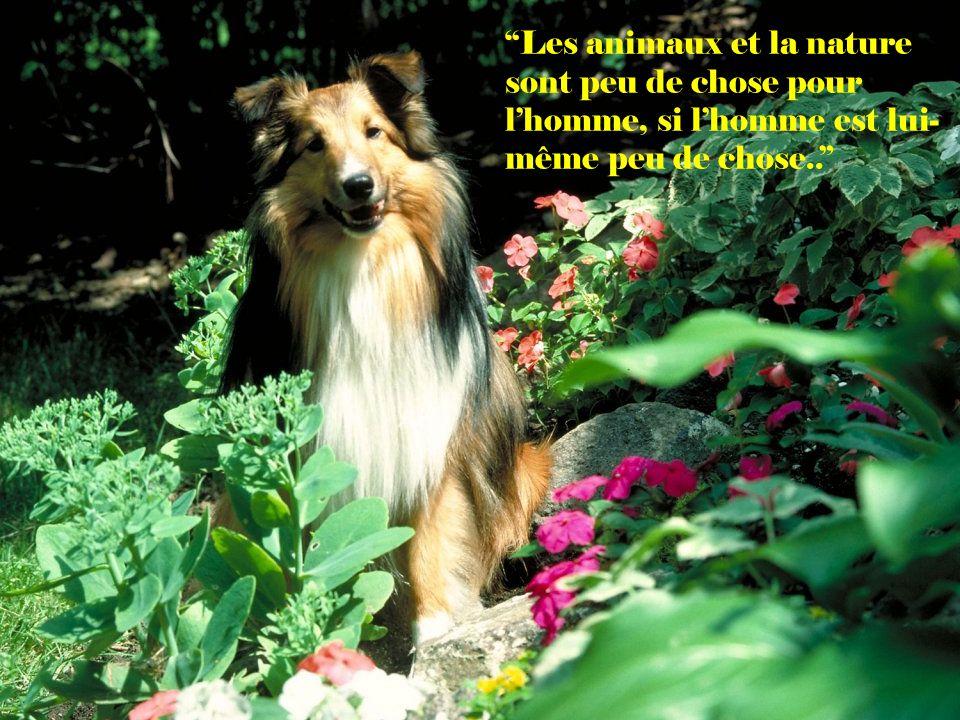 Si vous cherchez quelquun qui vous accompagne toujours avec plaisir lors de vos promenades, prenez un chien.. (David Brown)