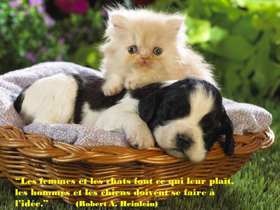 Une vie sans chien est une erreur. (Carl Zuckmayer)