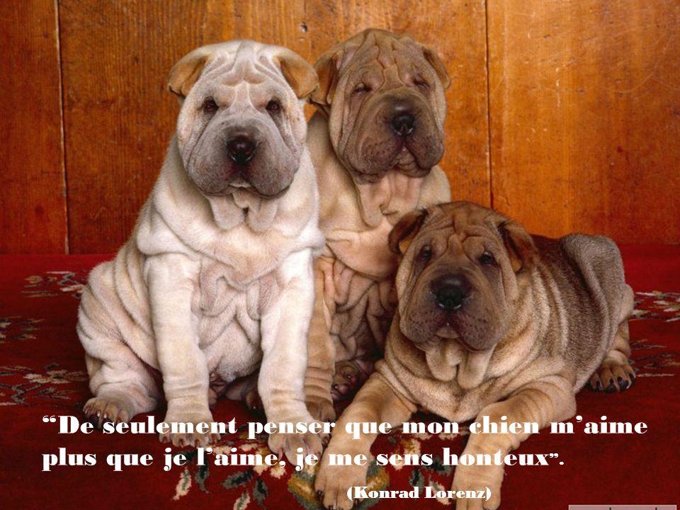 Les chiens ne sont pas tout dans notre vie, mais il la complète. (Roger Caras)