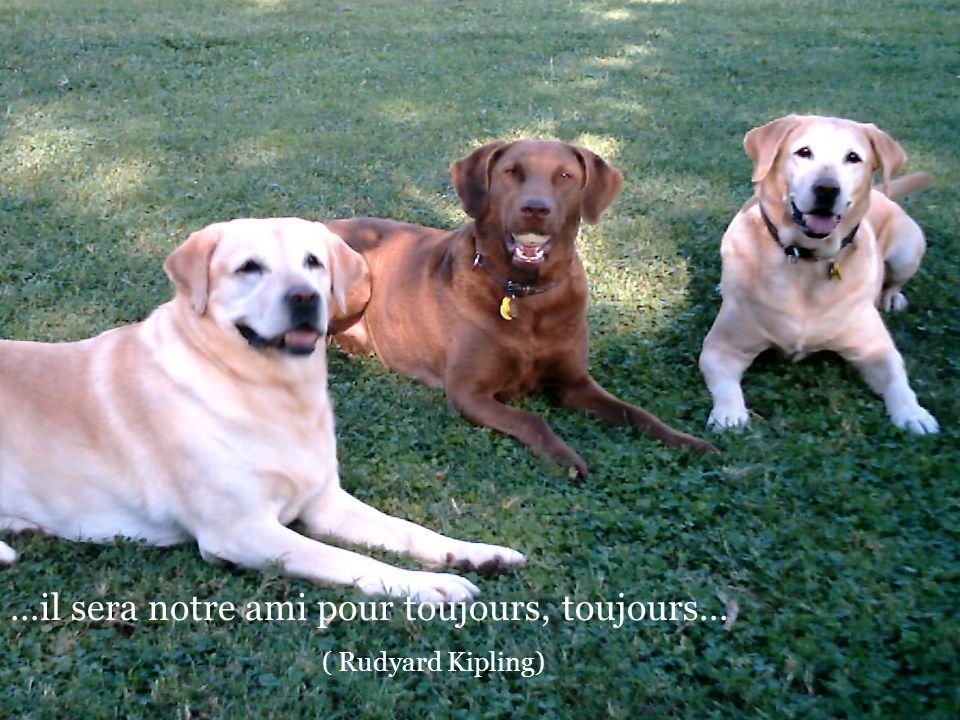 De seulement penser que mon chien maime plus que je laime, je me sens honteux. (Konrad Lorenz)