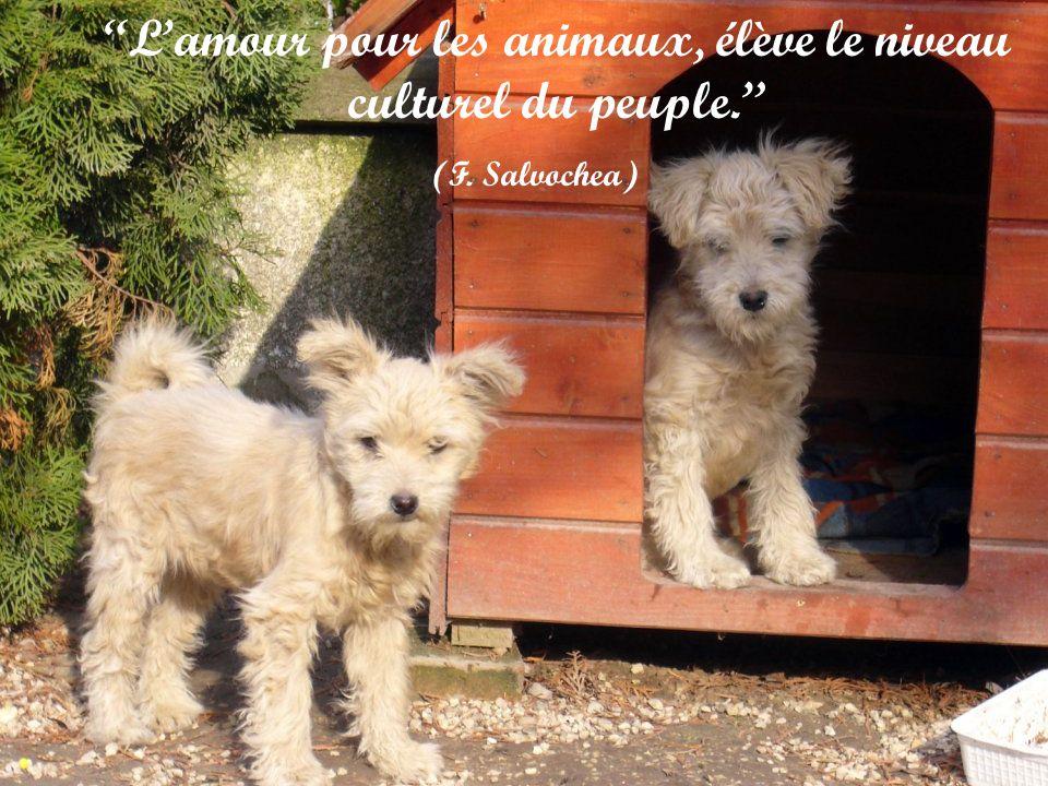 Les femmes et les chats font ce qui leur plaît, les hommes et les chiens doivent se faire à lidée. (Robert A. Heinlein)