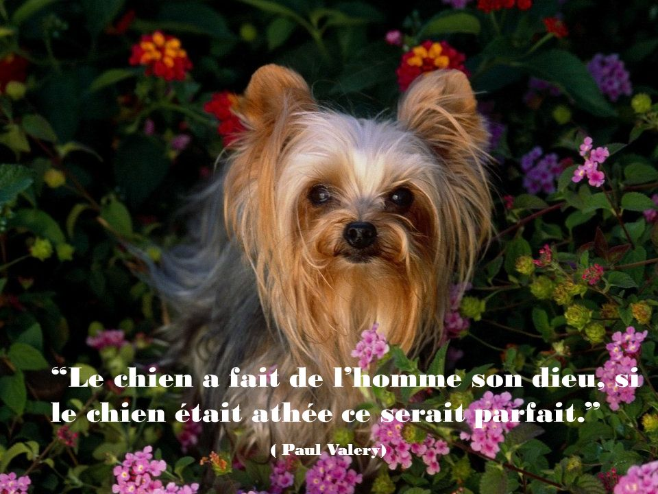 Quand vous abandonnez un chien parce quil ne vous sert plus ou vous gêne, les enfants apprennent la leçon.