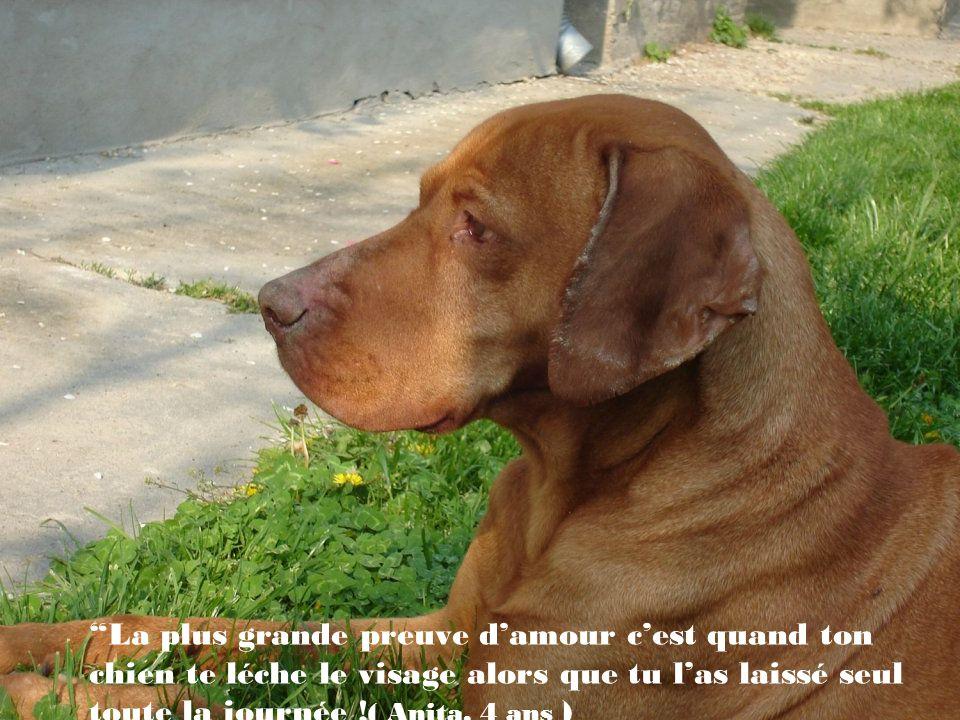 Le chien a fait de lhomme son dieu, si le chien était athée ce serait parfait. ( Paul Valery)