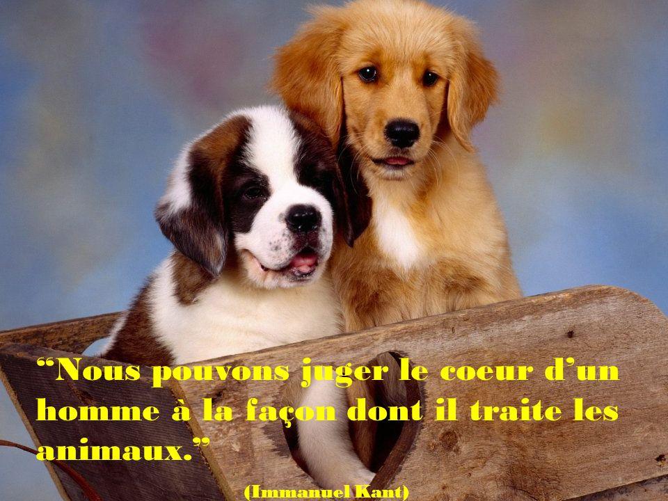 Il ne mimporte pas de savoir si un animal peut raisonner.Mais du seul fait de savoir quil peut souffrir je le considère comme un camarade.