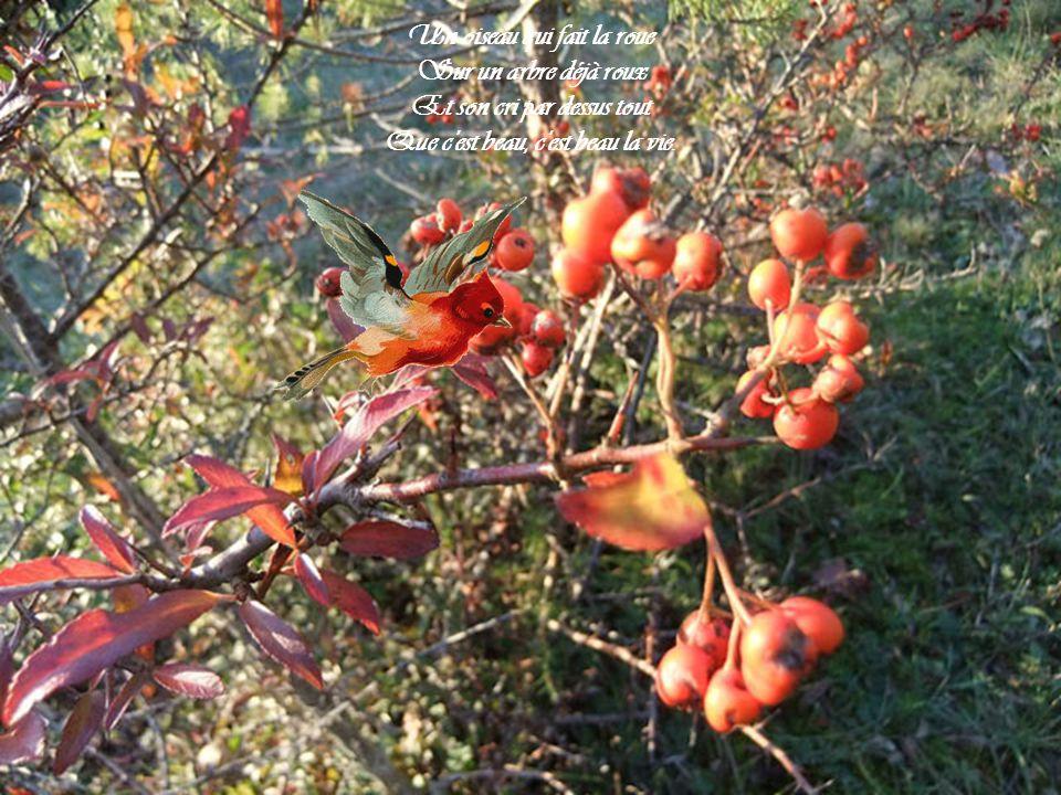 Un oiseau qui fait la roue Sur un arbre déjà roux Et son cri par dessus tout Que c est beau, c est beau la vie.