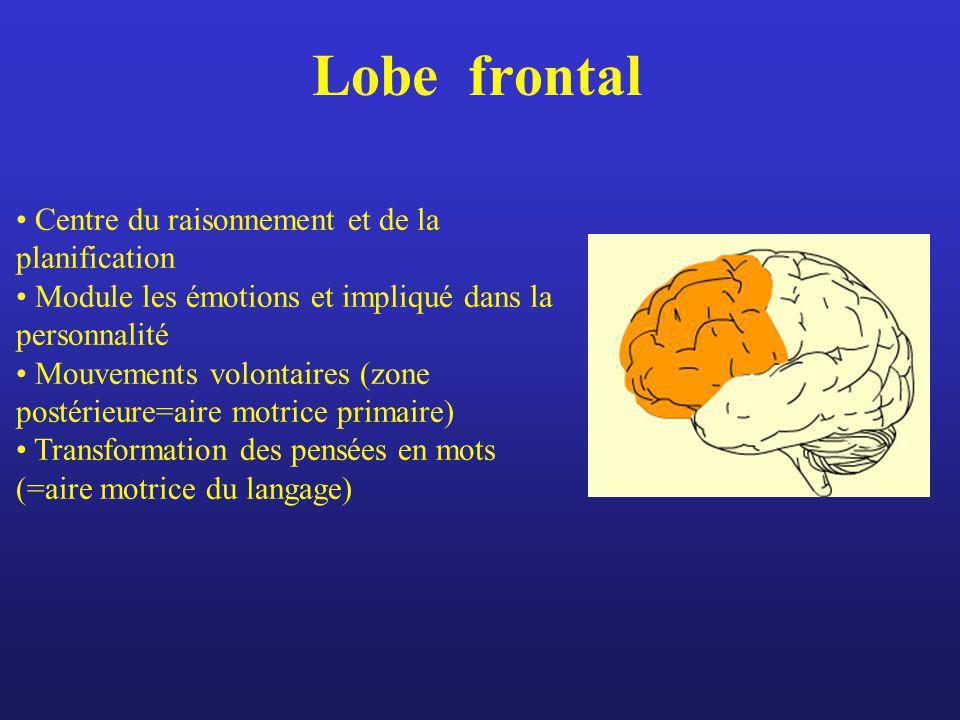 Lobe frontal Centre du raisonnement et de la planification Module les émotions et impliqué dans la personnalité Mouvements volontaires (zone postérieu