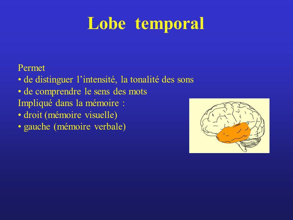 Lobe temporal Permet de distinguer lintensité, la tonalité des sons de comprendre le sens des mots Impliqué dans la mémoire : droit (mémoire visuelle)