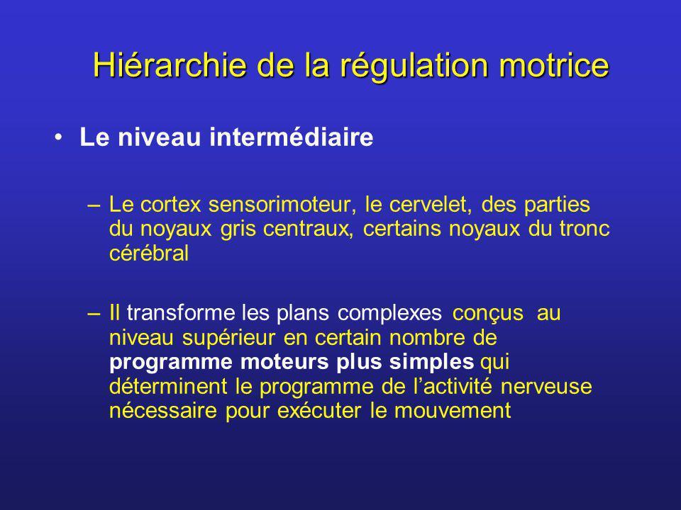 Hiérarchie de la régulation motrice Le niveau intermédiaire –Le cortex sensorimoteur, le cervelet, des parties du noyaux gris centraux, certains noyau