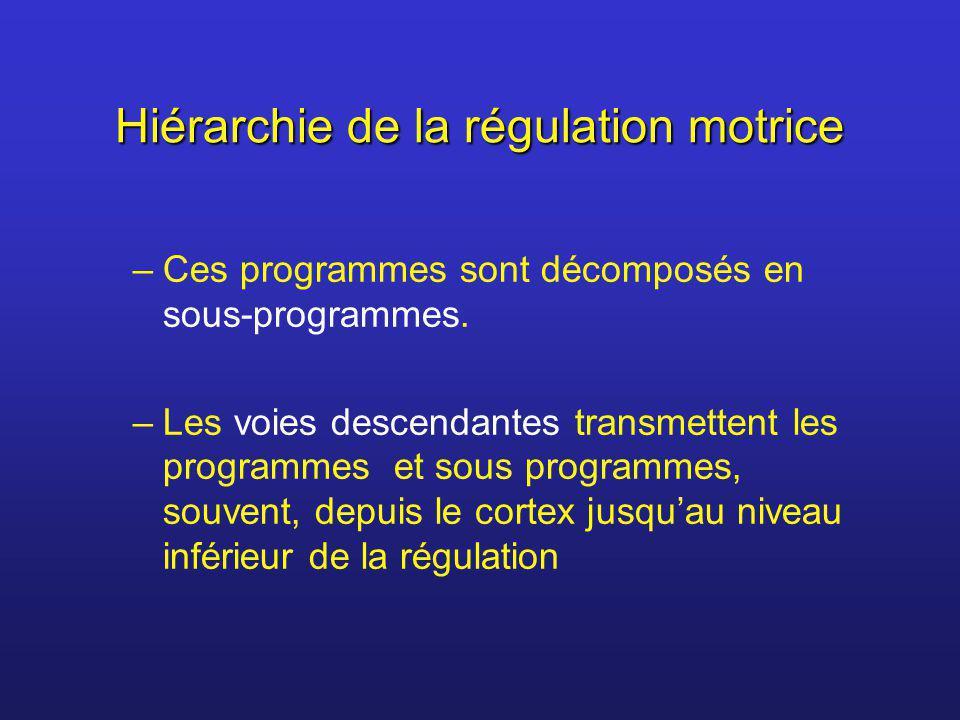 Hiérarchie de la régulation motrice –Ces programmes sont décomposés en sous-programmes. –Les voies descendantes transmettent les programmes et sous pr