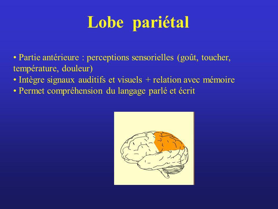 Lobe pariétal Partie antérieure : perceptions sensorielles (goût, toucher, température, douleur) Intègre signaux auditifs et visuels + relation avec m